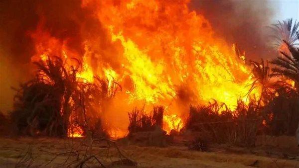 حريق هائل يلتهم 400 طن من قش الأرز فى دكرنس بالدقهلية